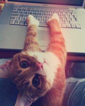 PRAYING – FOR CATS AND COMPUTERS
