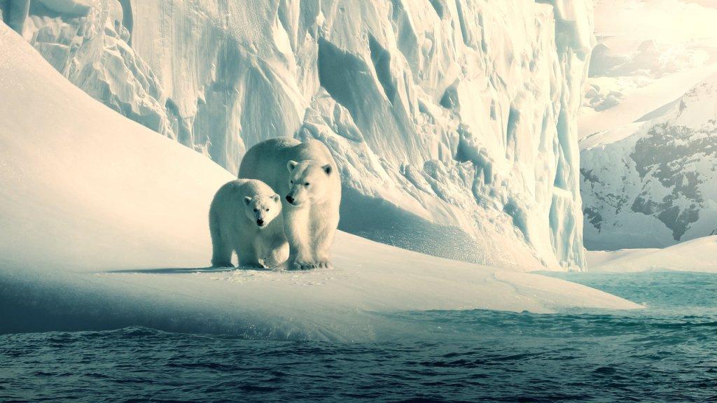 Una osa polar y sus osezno miran el mar sobre la nieve