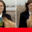 Perrito roba micrófono