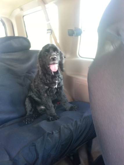 In for the sojourn is one happy dog!