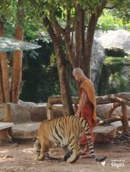 day-trip-bangkok-tiger-temple-monge-com-tigre