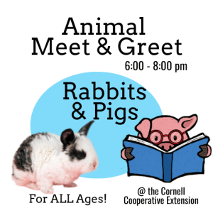 Animal Meet and Greet. Rabbits and Pigs