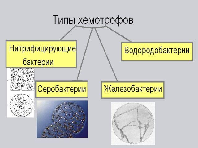 Хемотрофы