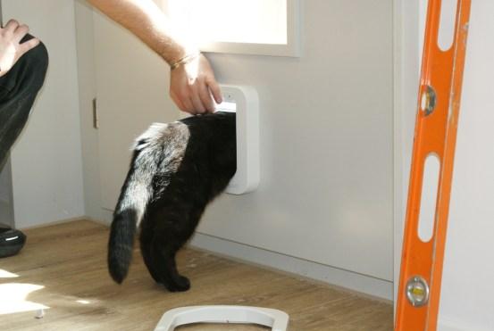 Onyx testet Katzentür