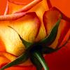 fooish_icons_orange4
