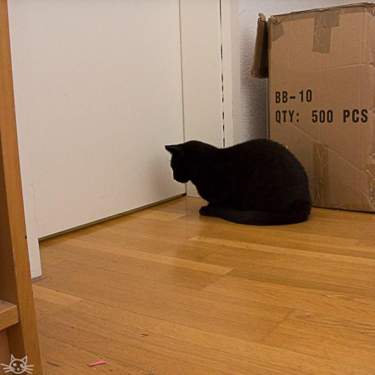Auf geht's Haushalt machen. Der Saugroboter hinter der Tür lockt die Katze an.
