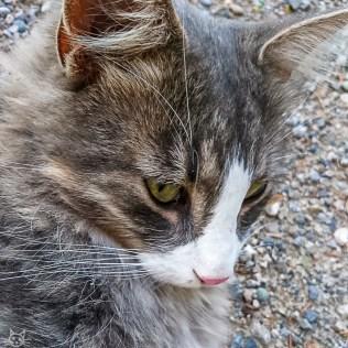 mit kuschelbedürftiger Katze im Wald