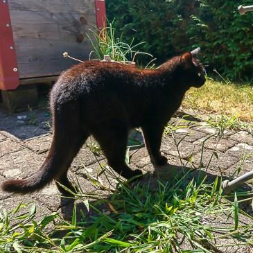 Die Katze hilft mir im Garten seltsames Grünzeug aus den Ritzen zwischen den Steinen zu ziehen.