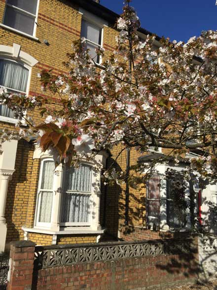 0467-rear-extension-in-finsbury-park-vorbild-architecture-02