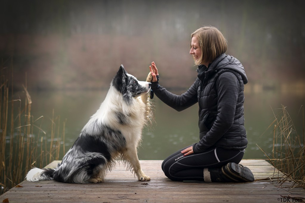 TDK foto, high five, voreshund.dk, voreshund, border collie, bluemerle