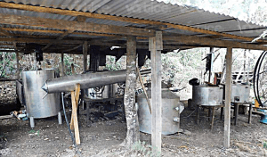 Desmantelan laboratorio clandestino de droga sintética en Las Margaritas