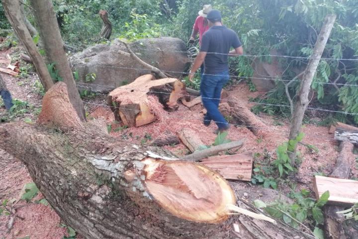 Detiene Fiscalía a dos personas por el presunto delito de ecocidio en Tonalá