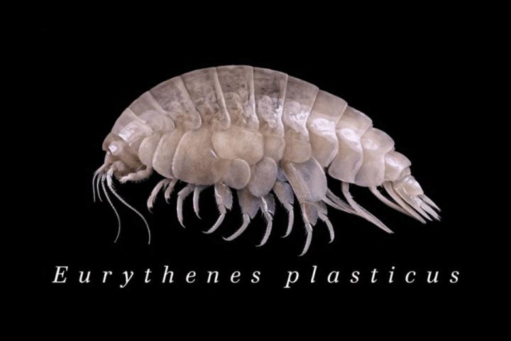 Descubren especie con estructura celular de contaminantes de plástico
