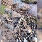 Encuentran cadáver en estado de descomposición en Pantelhó