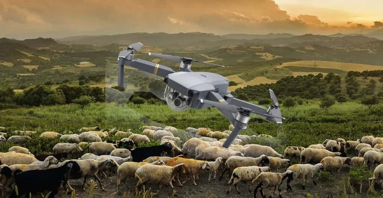 Drone ovce pexels-photo-635006