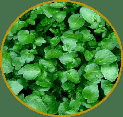 suco verde de agrião