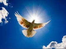 781 pombo da paz