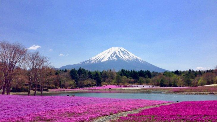 """【河口湖】《GWにオススメ》バスで行ける!見頃はGW頃?富士山が一望!""""富士芝桜まつり""""!"""