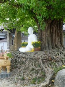 Bouddha au creu d'un arbre