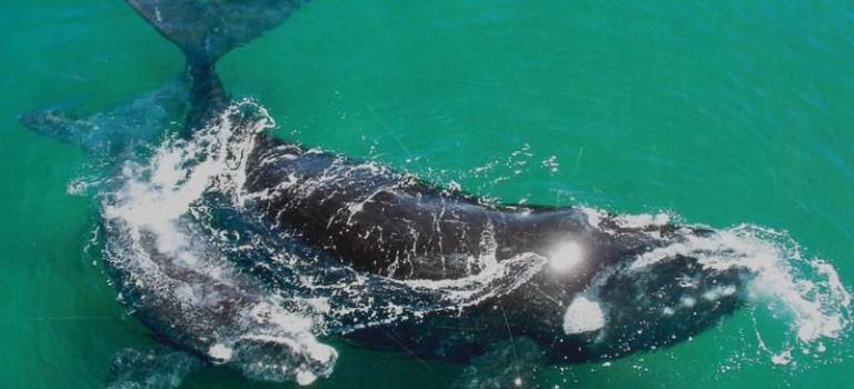 Des baleines et des hommes