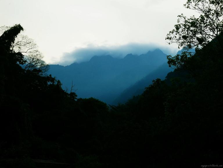 Montée de brume sur la jungle le au crépuscule