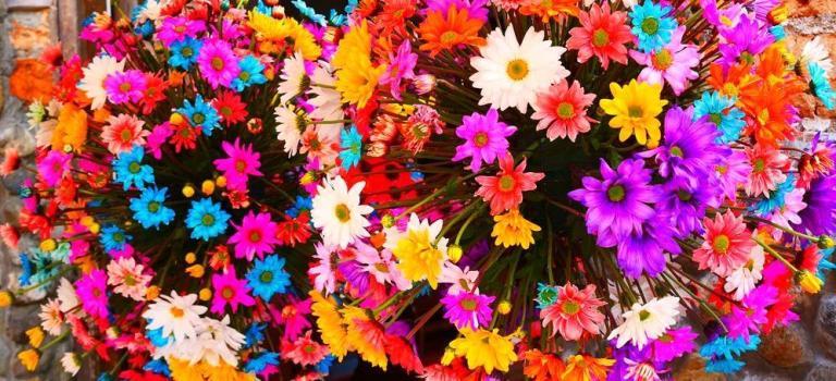 Medellin fête les fleurs