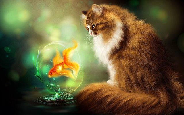 wallpapers et fonds d'écran chat fantasy poisson