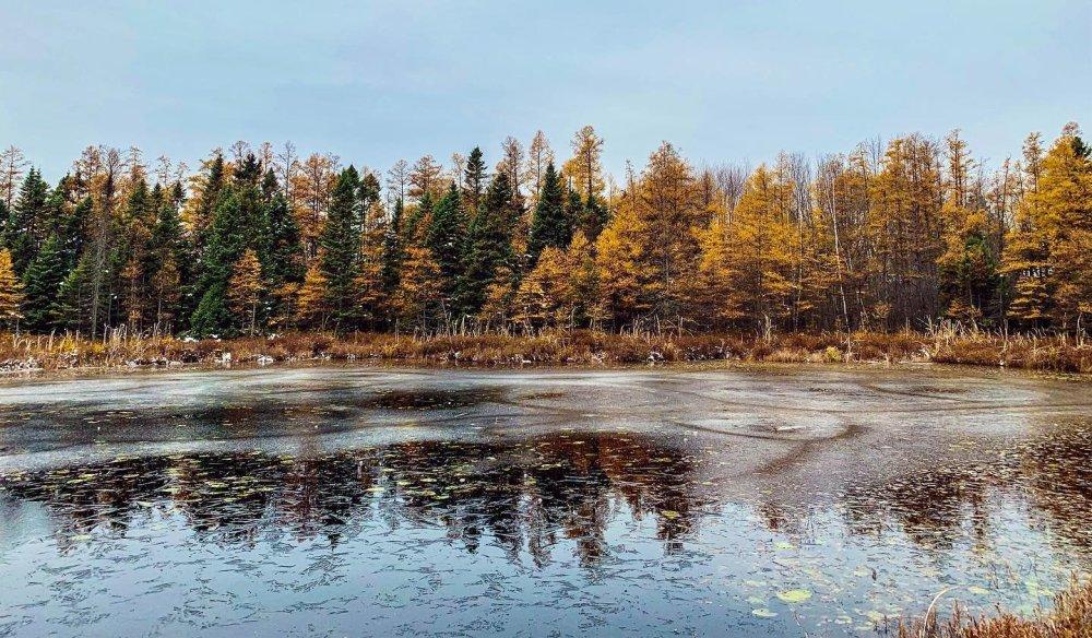 vue d'un étang entouré des couleurs d'automne