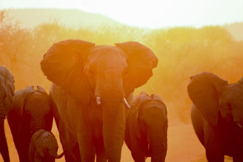 troupeau-elephant-madikwe