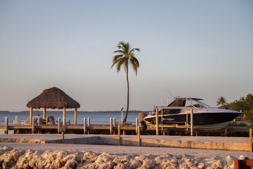Snook Bayside Key Largo Florida