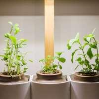 J'ai testé... LILO, le jardin d'intérieur design & connecté de Prêt à Pousser