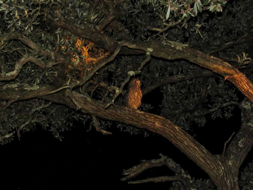 chouette-safari-nocturne