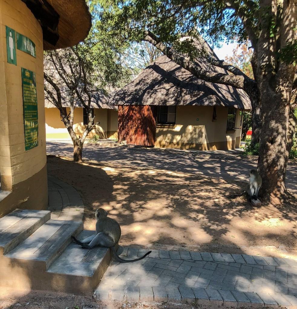 camps-pretoriuskop-afrique-du-sud