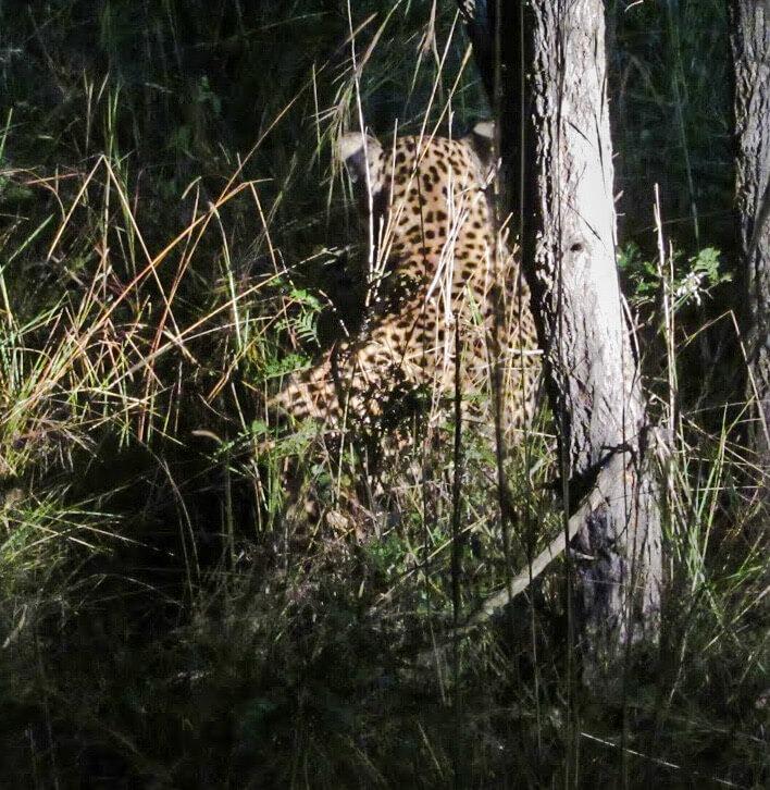 Big5-leopard-Afrique-du-Sud
