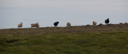 201407 - Islande - 0256