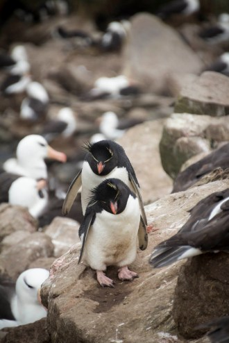 201412 - Antarctique - 0058