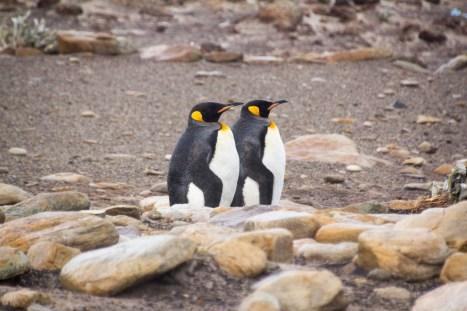 201412 - Antarctique - 0140
