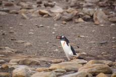 201412 - Antarctique - 0141