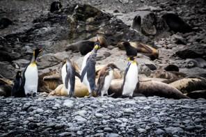 201412 - Antarctique - 0308