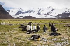 201412 - Antarctique - 0371