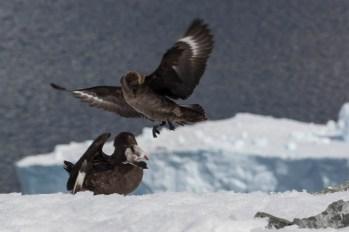 201412 - Antarctique - 1144