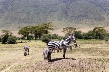 201503 - Tanzanie - 0200