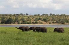 201504 - Botswana - 0018