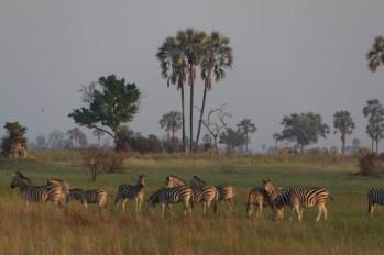 201504 - Botswana - 0075