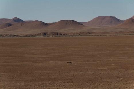 201504 - Namibie - 0338