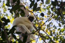 201505 - Madagascar - 0334