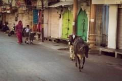 201603 - Inde - 0349