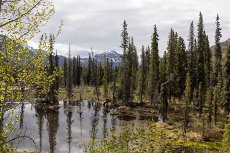 201605 - Alaska and Yukon - 0272
