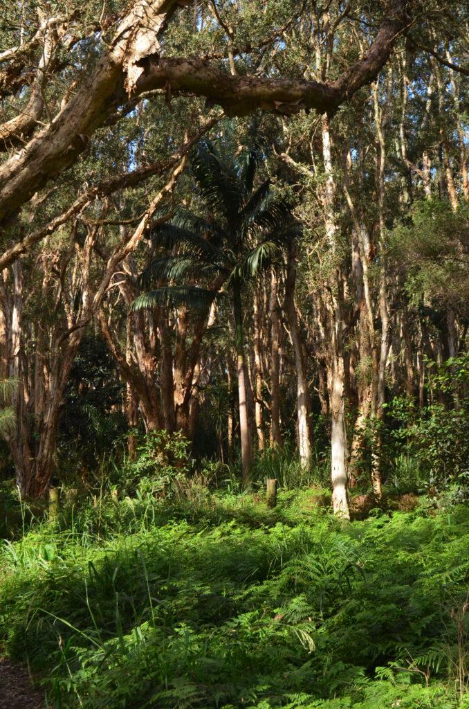 Centennial Park à Sydney