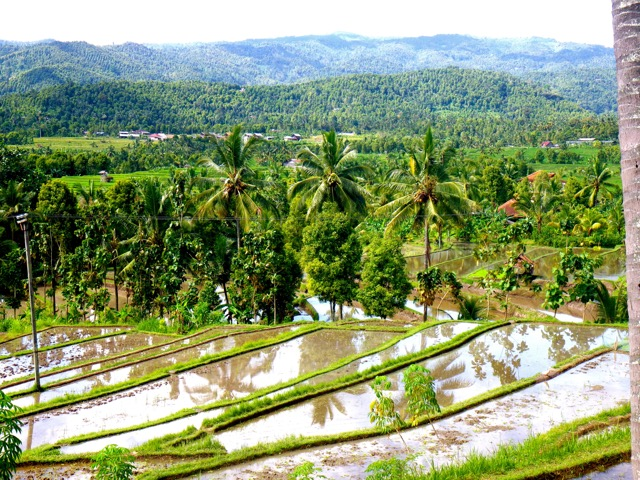 rizieres-munduk-bali-campagne